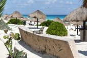 image of yucatan  - Mexican iguana at Cancun Beach on the Yucatan - JPG