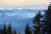 Pine trees on Tatra Mountain background