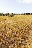 Rural field at pai district, Mae Hong Son Province,Thailand.