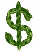 Dollar sign made of green leaves isolated on white