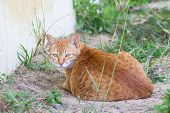 Cute Cat Sitting On The Ground And Looking Back