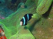 Fish-clown