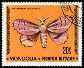 Vintage  Postage Stamp. Butterfly Gasstropacha Quercifolia.