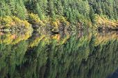 Reflection Of Tree On Mirrir Lake At Jiuzhaigou