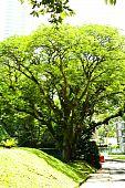 tree in urban city