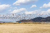Republic of Korea Migratory Birds