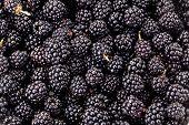 Fresh ripe blackberries. Food background.