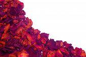 Dried Rose Petals Wave