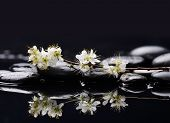 branch tropical flower with therapy stones reflection
