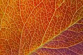 Close-up of autumn leaf. Macro.