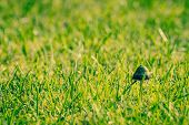 stock photo of shroom  - Small shroom in fresh green grass in autumn - JPG