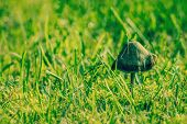 pic of shroom  - Magical mushroom on a fresh green lawn - JPG