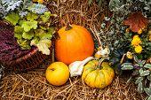 Pumpkin Ornament In The Fall