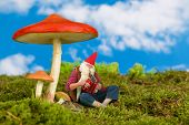 Funny old garden gnome playing music under a toadstool