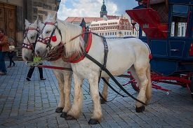 pic of carriage horse  - Horse carriages in Dresden - JPG