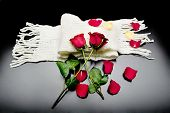 pic of poetry  - two red roses together with red petals on a black background on a scarf Poetry - JPG