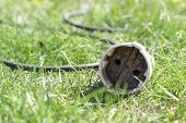 picture of extend  - The old socket the extender in a grass - JPG