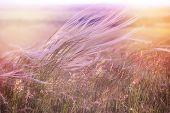 foto of grass area  - Fluffy grass  - JPG