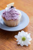 image of chocolate muffin  - Delicious muffin with blueberry cream and white chocolate on top - JPG