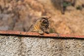 pic of observed  - Funny cat observed environment from a stone wall - JPG