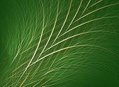 picture of fescue  - grass - JPG