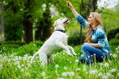stock photo of cute dog  - Beautiful woman with playful young dog on fresh green meadow - JPG