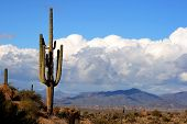 High Desert With Cactus,Mountains And Clouds