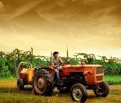 Bauer Traktor fahren, in einem Weinberg