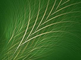 foto of fescue  - grass - JPG
