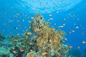 Beautiful Coral Reef Scene