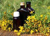 Medical herb -St John's wort