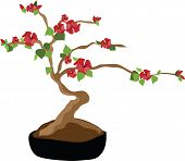 Blooming Bonsai Tree
