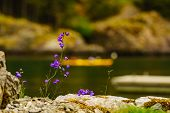 Lake, River On Norwegian Fjord Shore With Summer Flowers And People Kayaking On Water In The Backgro poster
