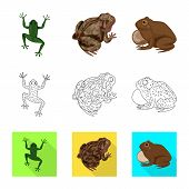 Vector Illustration Of Wildlife And Bog Sign. Collection Of Wildlife And Reptile Vector Icon For Sto poster