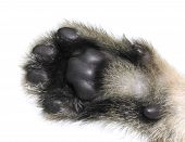 Kitten Paw Bottom Up