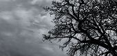 Silhouette Dead Tree And Branch On Grey Sky Background. Black Branches Of Tree. Nature Texture Backg poster