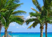 Palm Trees With Cozumel Island In The Distance