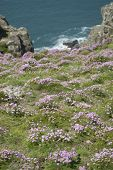 Wildflowers on Coast