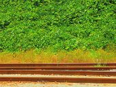 stock photo of kudzu  - Rusty railroad tracks on the foreground a wall of kudzu on the background - JPG