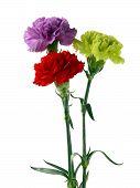 multicolor carnations in posy