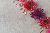 Natural Flowery Background. Composition With Dry Gerbera Flowers And Petals. Flowers On Linen Cloth  poster