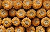 Whole Dried Sweetcorn