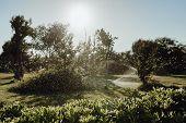 Sprinkler Irrigation Maintenance For Tree Garden. Water Drops Above Green Bush In Yard At Sunrise Da poster