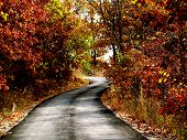 Winding Road Autumn Foliage