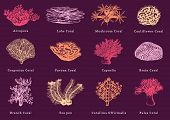 Vector Illustrations Of Color Corals. Collection Of Drawn Sea Polyps poster