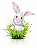Little white rabbit  on reflective grass