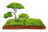 stock photo of hardcover book  - The big tree growth from a book isolated on white background - JPG