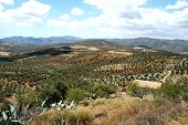 Olivares, Andalucía, España.