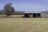foto of colorado high country  - farm shed and a single tree in a high - JPG