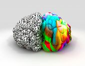 foto of left brain  - A typical brain with the left side depicting an analytical structured and logical mind and the right side depicting a scattered creative and colorful side on an isolated background - JPG